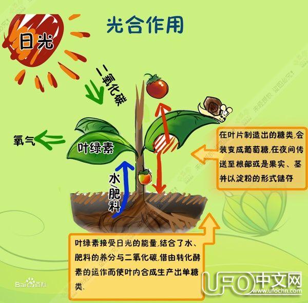 植物光合作用的过程 光合作用的化学方程式